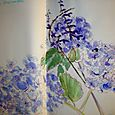 Salvia and hydrangea, beginning of the blues