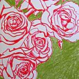 Coral roses on green