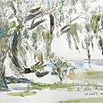 Middleton oak