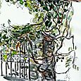 Grape arbor and gate