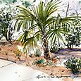 My new Mediterranean garden, second look