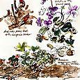 Garden journal peony buds