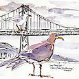 Gulls and Golden Gate bridge