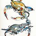 Blue crabs x 2