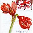 Journal: amaryllis