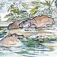 Berlin Zoo: hippos