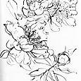 My garden: peonies