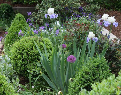 Greenwood-gardens-iris_allium