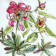 My-garden: peonies, euphorbia