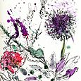 My garden: allium, peony, lavender