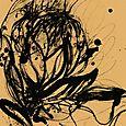 Protea litho