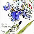 Happy iris: my garden