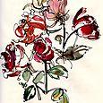 Journal: week-old roses
