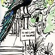 Austin: peacock at Laguna Gloria