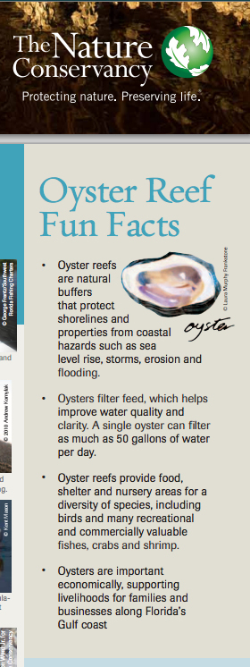 Oyster-for-tNC