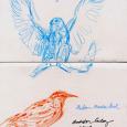 NCMA Audubon Gallery birds