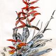 Alaska: Fireweed and driftwood