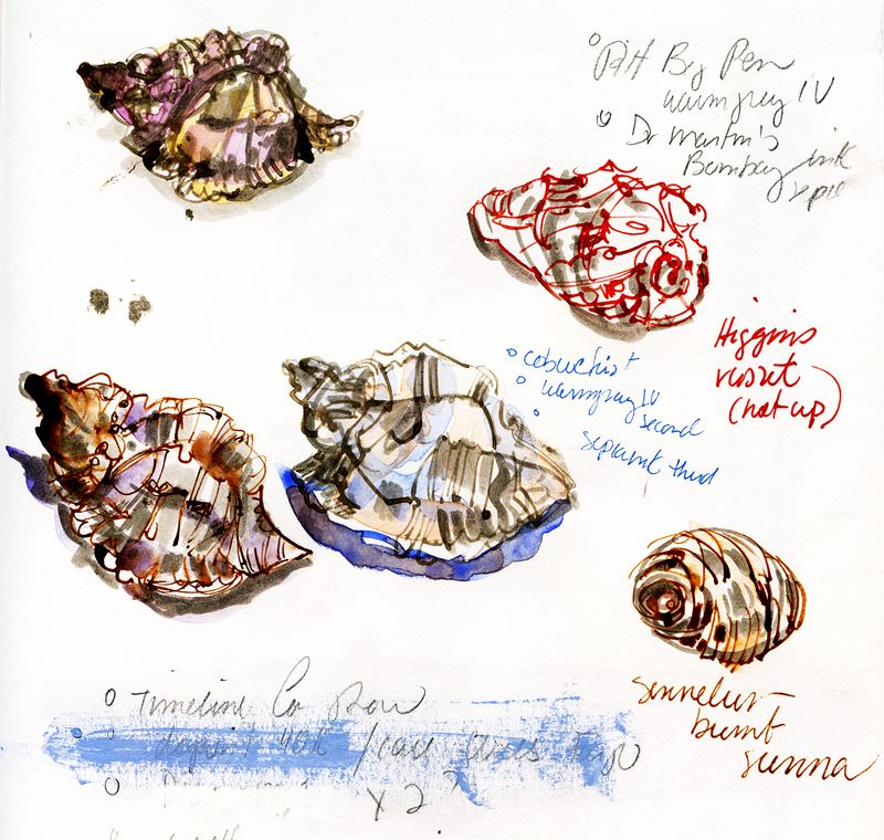 Journal-page--shell-studies-cropped
