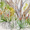 Pasadena sketches: Huntington Gardens