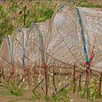 Peregrine Farm, canopies