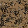 Peregrine Farm, honeysuckle drawn with blueberry bush charcoal