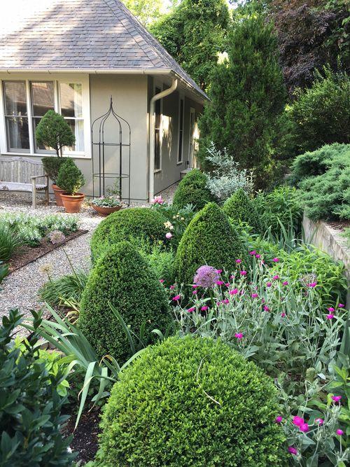 Garden-with-rose-campion