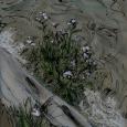 Alaska lake edge driftwood copy