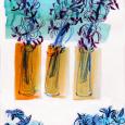 Journal: hyacinth spread