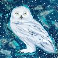 Snowy owl for Miles, acrylic on board