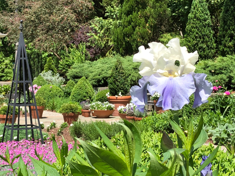 Laura-garden-blog-iris-up-close