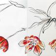 Pam's tulips reaching