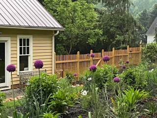 Garden with studio and alliums