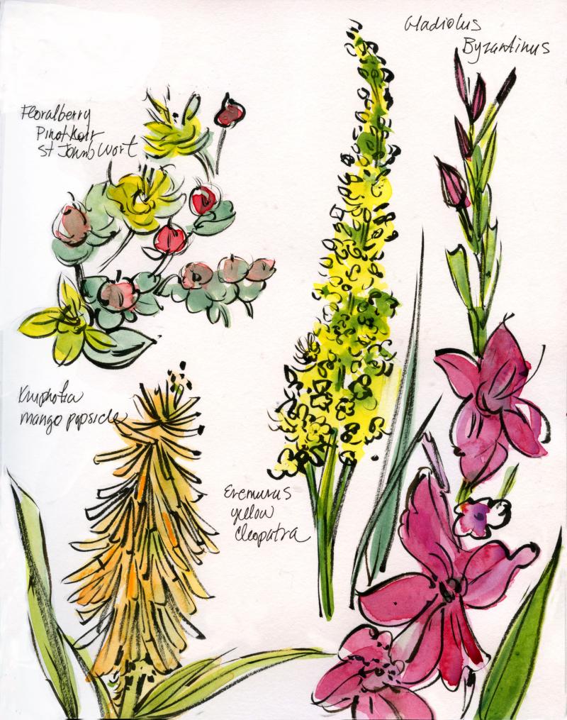 New-house-garden-plants