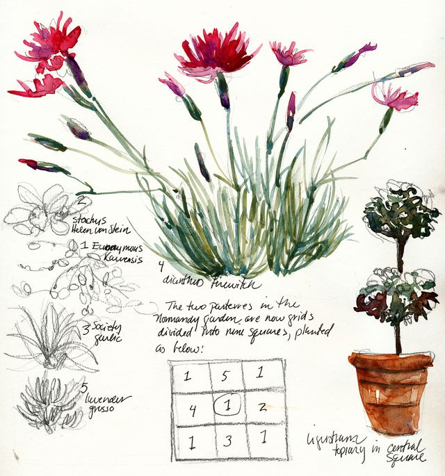 Garden journal dianthus