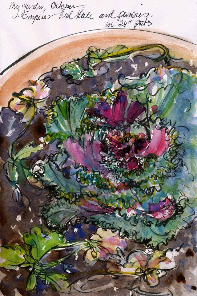 My garden: kale in pots