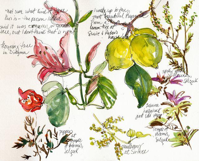 Turkey: fruit and flowers