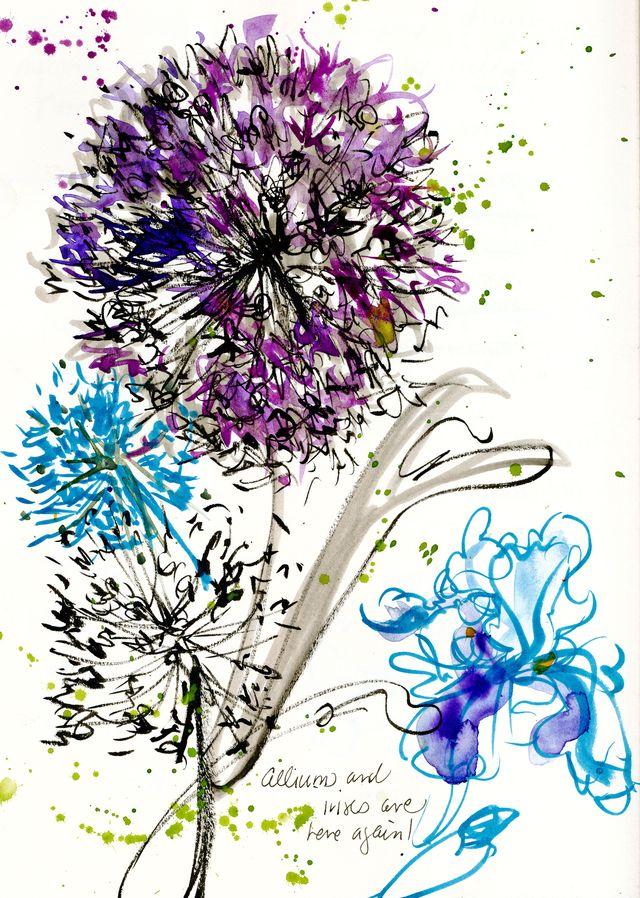Alliums and iris: my garden
