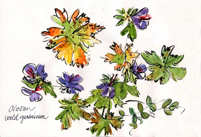 Alaska:Alaskan wild geranium