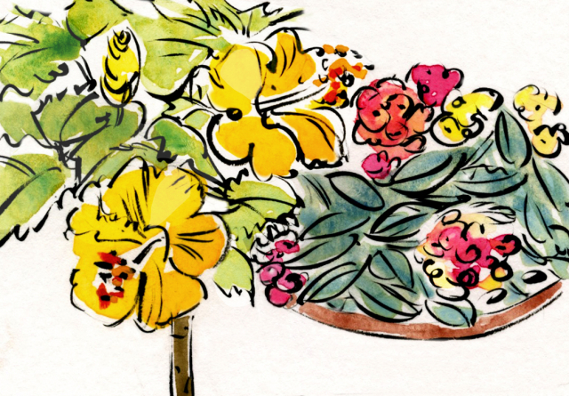 Csd hibiscus pruned