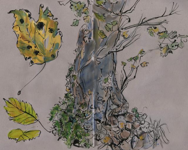 Wales: tree in holloway near Dulas Bay
