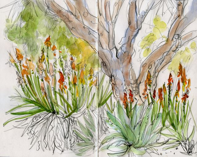 Pasadena sketches: Huntington Gardens